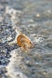Zeeschelp in het zand Royalty-vrije Stock Afbeelding