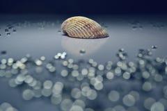 Zeeschelp met Crystal Bokeh - Blauwe Toon Royalty-vrije Stock Afbeeldingen