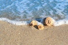 Zeeschelp op de kust stock afbeeldingen