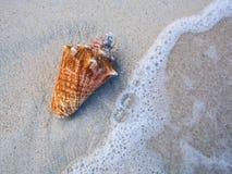 Zeeschelp op een strand Stock Foto