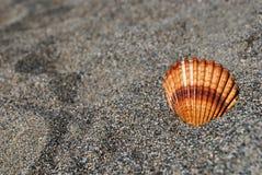 Zeeschelp op het grijze zand stock afbeeldingen