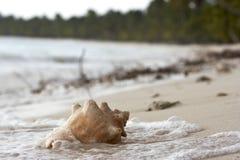 Zeeschelp op het strand Stock Fotografie