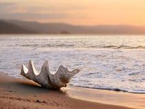 Zeeschelp op het strand Stock Afbeelding