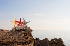 Zeeschelp op het strand Royalty-vrije Stock Foto