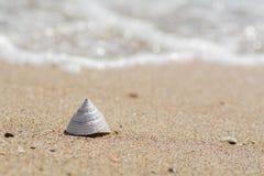 Zeeschelp op het strand Stock Foto