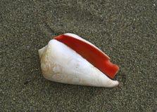 Zeeschelp op het zand Stock Fotografie