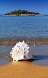 Zeeschelp op Mediterraan strand Stock Fotografie