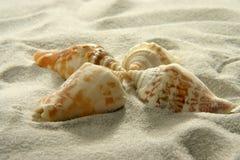 Zeeschelpen (3) Stock Fotografie