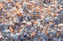 Zeeschelpen Stock Fotografie