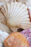 Zeeschelpen Stock Afbeeldingen
