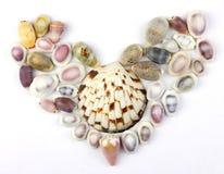 Zeeschelpen in de vorm van hart Stock Afbeelding
