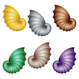Zeeschelpen die op wit worden geïsoleerdo Reeks Kleurrijke Shells Royalty-vrije Stock Afbeelding