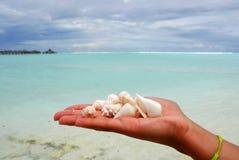 Zeeschelpen in een hand Stock Foto's