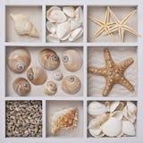 Zeeschelpen in een witte doos Royalty-vrije Stock Foto's