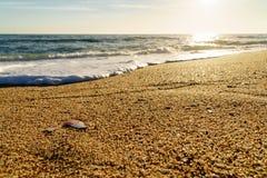 Zeeschelpen en golven bij het strand in Portugal bij zonsondergang royalty-vrije stock afbeelding
