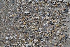 Zeeschelpen en kiezelstenen op het strand Stock Afbeeldingen