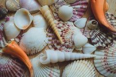 Zeeschelpen en Koraal als achtergrond Stock Afbeelding