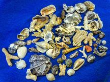Zeeschelpen en koralen van Vietnam Stock Fotografie