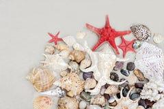 Zeeschelpen en rode seastars op het zand, de achtergrond van het de zomerstrand met exemplaarruimte voor tekst royalty-vrije stock foto's