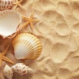 Zeeschelpen en zand royalty-vrije stock afbeelding