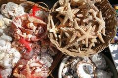 Zeeschelpen en Zeester Stock Foto