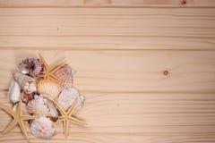 Zeeschelpen en zeester op een houten achtergrond Stock Afbeeldingen