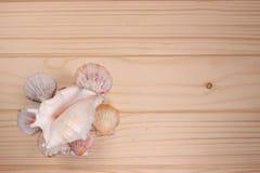 Zeeschelpen en zeester op een houten achtergrond Royalty-vrije Stock Fotografie