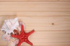 Zeeschelpen en zeester op een houten achtergrond Stock Foto