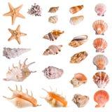 Zeeschelpen en zeesterinzameling Stock Foto's