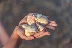 Zeeschelpen in handen stock foto's