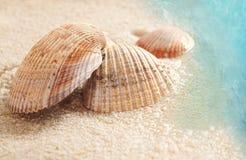 Zeeschelpen in het natte zand Stock Afbeeldingen