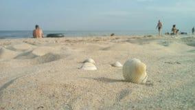 Zeeschelpen in het zand stock fotografie