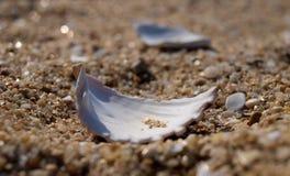 Zeeschelpen in het zand Stock Foto's
