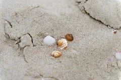 Zeeschelpen in het zand op het strand royalty-vrije stock afbeelding