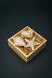 Zeeschelpen in houten doos zwarte blackground Royalty-vrije Stock Afbeelding