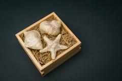 Zeeschelpen in houten doos zwarte blackground Royalty-vrije Stock Afbeeldingen