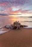 Zeeschelpen op de kust Stock Afbeeldingen