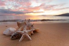 Zeeschelpen op de kust Royalty-vrije Stock Afbeelding