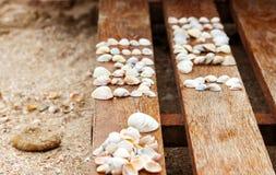 Zeeschelpen op een houten achtergrond op het strand van het Overzees van Azov Royalty-vrije Stock Fotografie