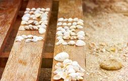 Zeeschelpen op een houten achtergrond op het strand van het Overzees van Azov Stock Foto's