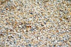 Zeeschelpen op een zandig strand in detail Stock Foto