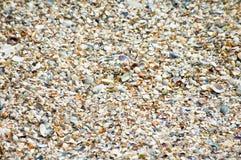 Zeeschelpen op een zandig strand in detail royalty-vrije stock afbeelding