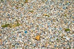 Zeeschelpen op een zandig strand in detail royalty-vrije stock afbeeldingen