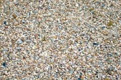 Zeeschelpen op een zandig strand in detail royalty-vrije stock fotografie