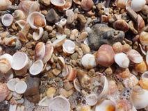 Zeeschelpen op het strand Royalty-vrije Stock Afbeelding