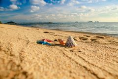 Zeeschelpen op het strand stock foto's