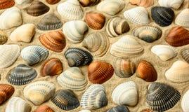 Zeeschelpen op het strandzand Royalty-vrije Stock Afbeeldingen
