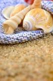 Zeeschelpen op het zand Royalty-vrije Stock Foto