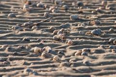 Zeeschelpen op het zand Stock Afbeeldingen