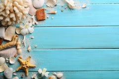 Zeeschelpen op hout Royalty-vrije Stock Foto